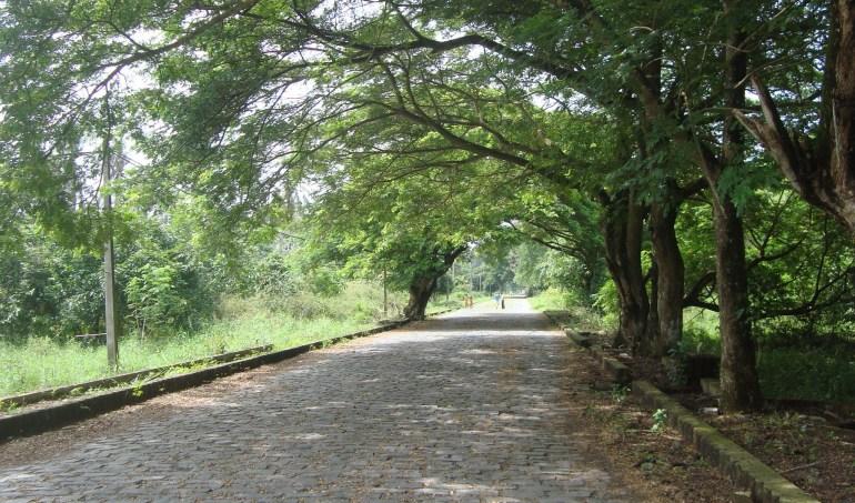 Con đường chạy qua khu di tích Gò tháp