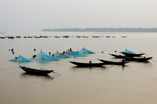 Bắt cá giống ở vùng gần cửa sông