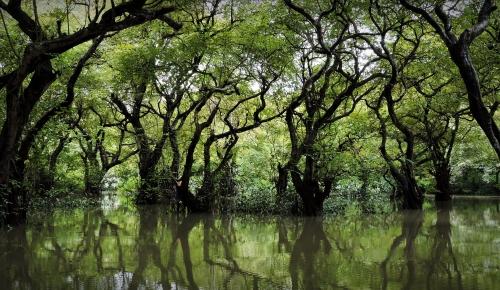 Cảnh một khu rừng ngập nước, một địa điểm du lịch có tiếng tăm khác, cách biên giới với Ấn độ không xa